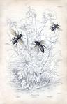 Превью bee botanical vintage Image GraphicsFairy5sm (258x400, 124Kb)
