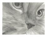 Превью joshua_hullender_pretty_kitty_cat_face_drawing_i (600x480, 186Kb)