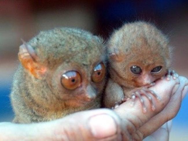 Малыши разных животных