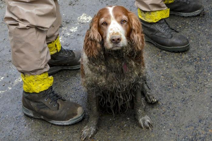 Собаки спасают людей от оползня в Вашингтоне