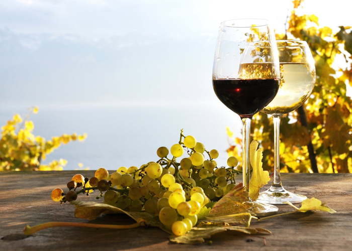 wine-white-red-grapes-leaves-table-vineyards (700x500, 361Kb)