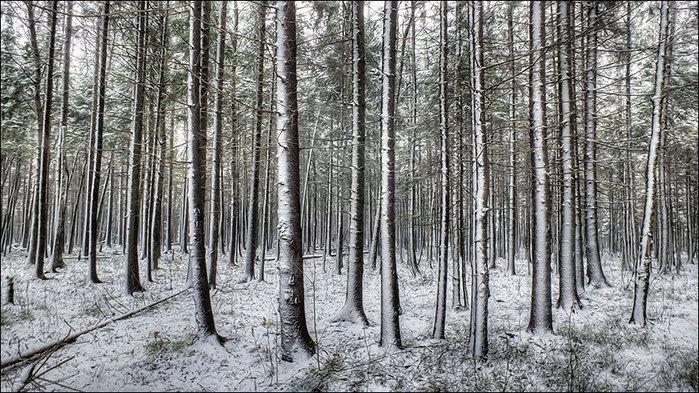 Зимнее настроение/3673959_6 (700x393, 146Kb)