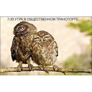 1868538_12070917_452213288295711_2037468652_n (320x320, 19Kb)