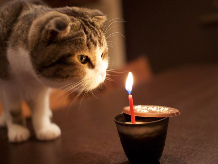 Вечер при свечах