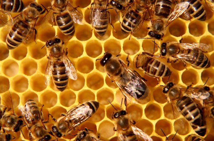 4826692_Beeproject (700x461, 288Kb)