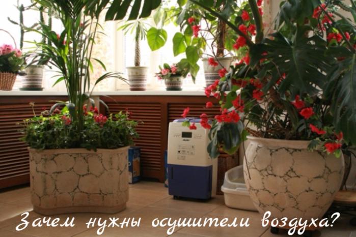 """alt=""""Зачем нужны осушители воздуха?""""/2835299_Zachem_nyjni_osyshiteli_vozdyha (700x466, 556Kb)"""