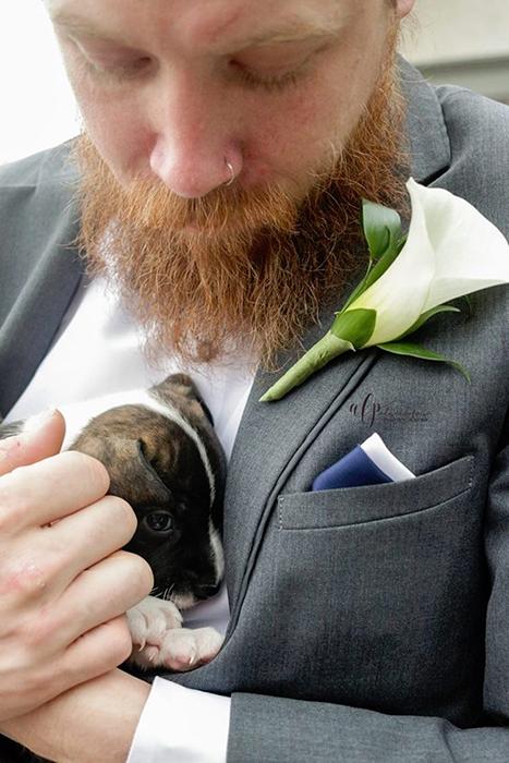 щенки на свадьбу 5 (467x700, 333Kb)