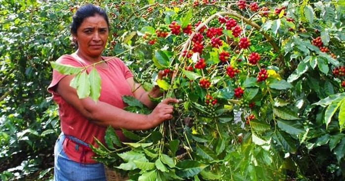 Немного о кофе и путешествиях на кофейные плантации