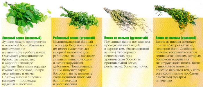 """alt=""""������ ����� - ������� ������.""""/2835299_Poleznie_svoistva_bannih_venikov (700x302, 165Kb)"""