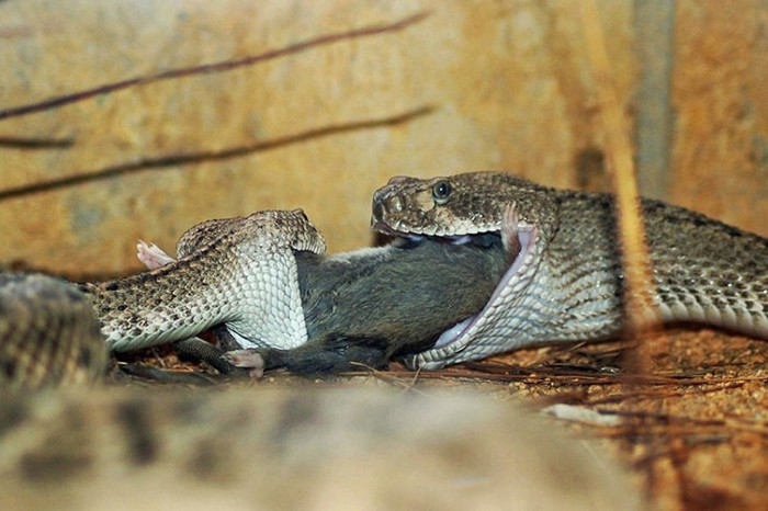 Фотографии животных за неделю: рождение цикады, плывущий слон и другие