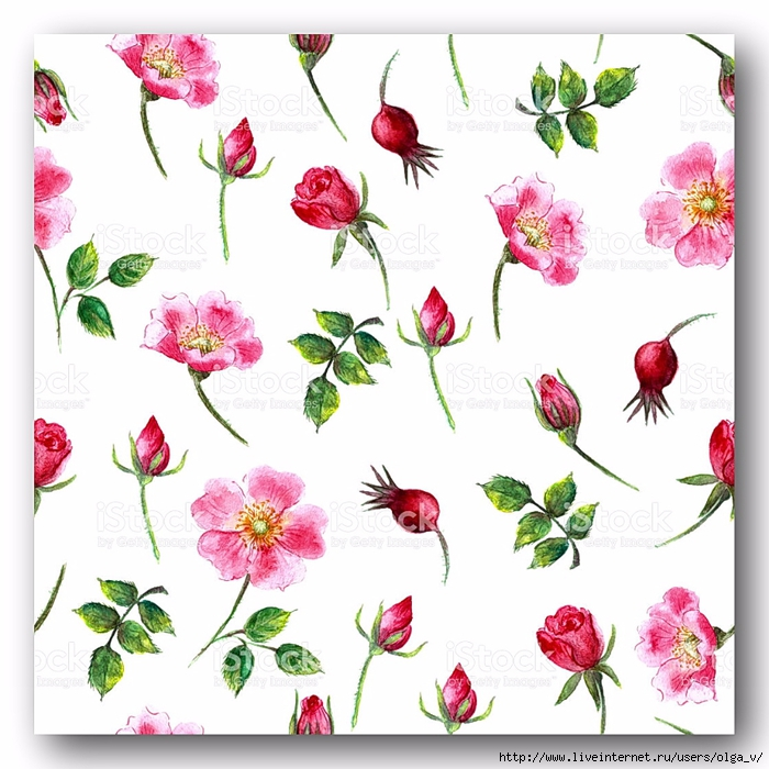 stock-illustration-70386711-hand-drawn-watercolor-wild-rose-seamless-pattern-in-bright-pink (700x700, 302Kb)
