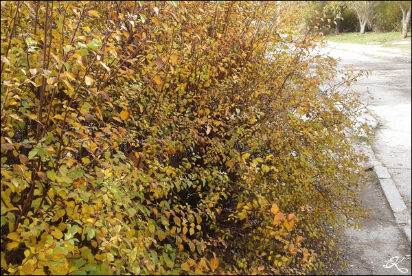 Autumn_04 (600x402, 406Kb)