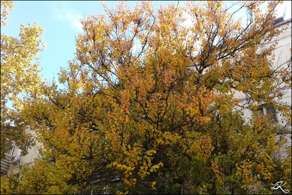 Autumn_11 (600x402, 391Kb)