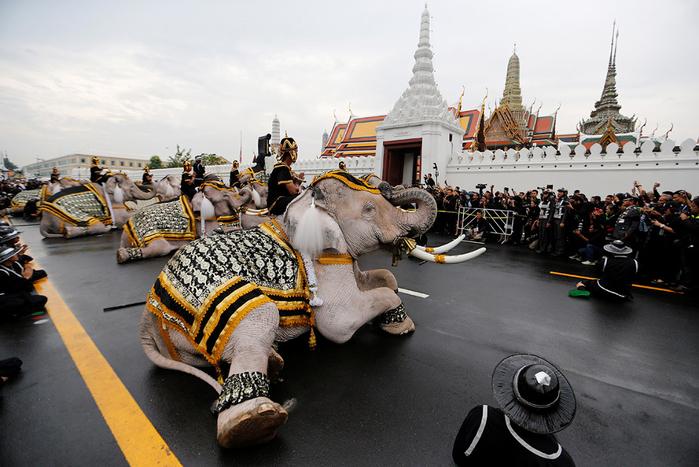 слоны таиланд 1 (700x467, 371Kb)