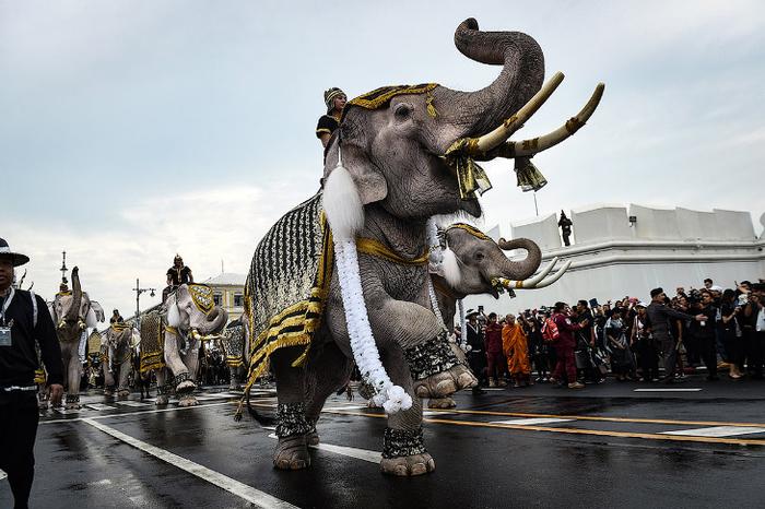 слоны таиланд 3 (700x466, 335Kb)