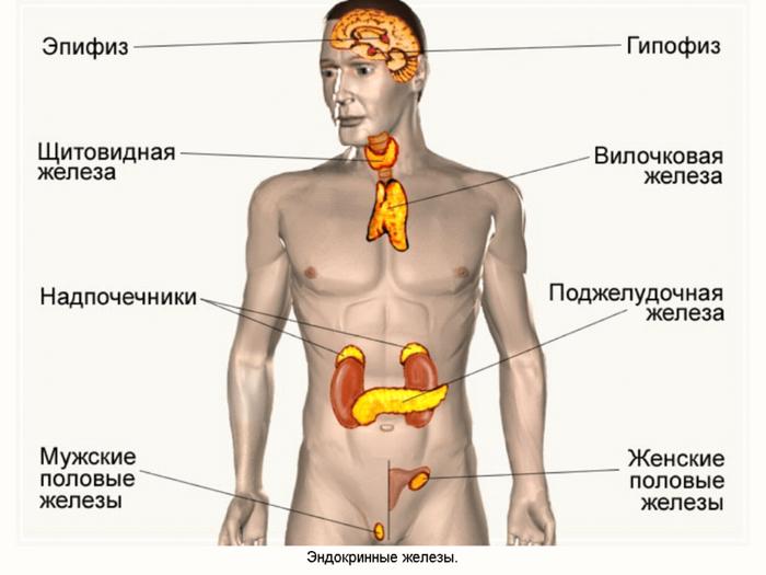 content_7__econet_ru (700x525, 391Kb)