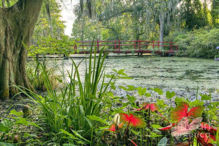 magnolia-plantation-swamp-garden-dustin-k-ryan (700x465, 143Kb)