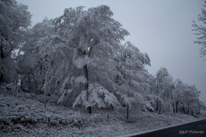 "alt=""Скоро выпадет снег...""/2835299_Skoro_vipadet_sneg___ (700x466, 93Kb)"