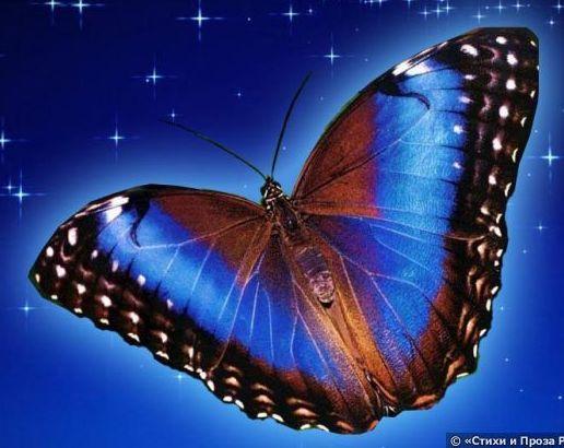 Поздравление крылья бабочки