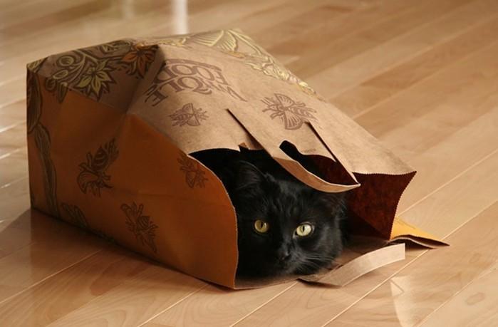 Лечит ли моча черной кошки   ответ профессионального врача