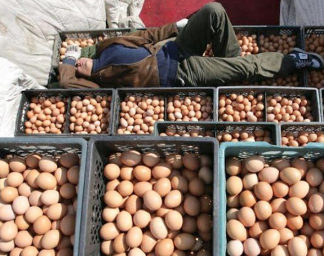 яйца (540x405, 95Kb)