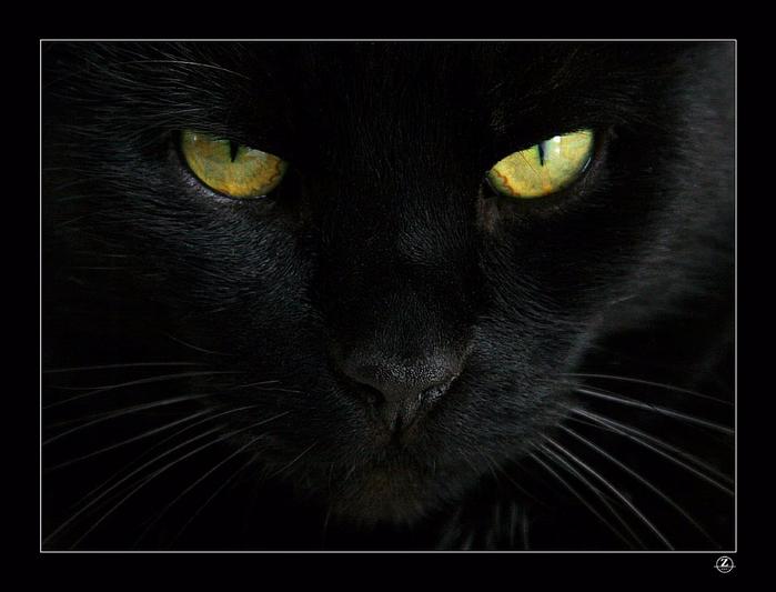 gatto_nero (700x533, 294Kb)