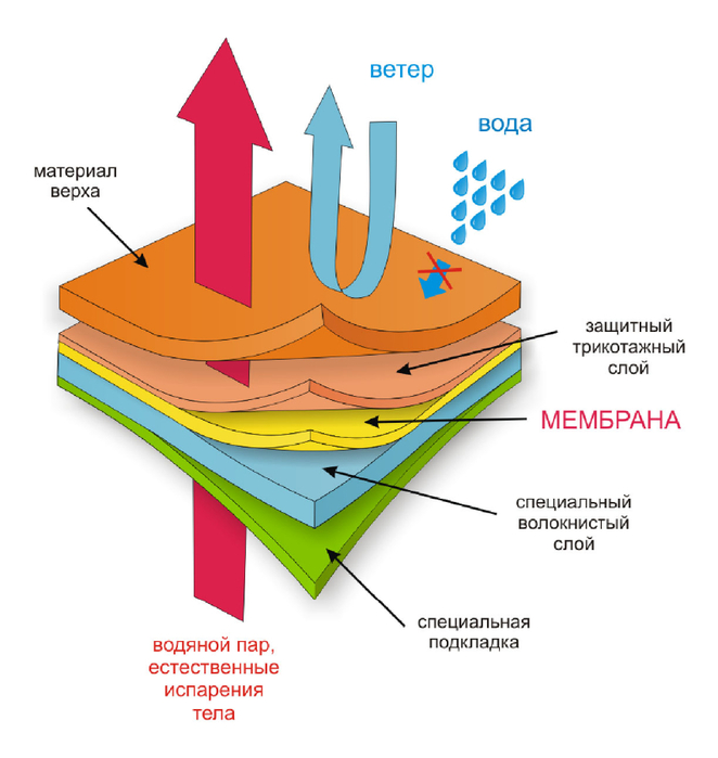 мембрана (662x700, 230Kb)