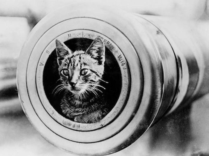 Как используют животных на войне