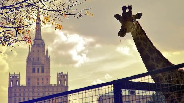 Как посетители Московского зоопарка реагируют на животных, а звери   на людей