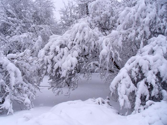 Много-снег (700x525, 406Kb)
