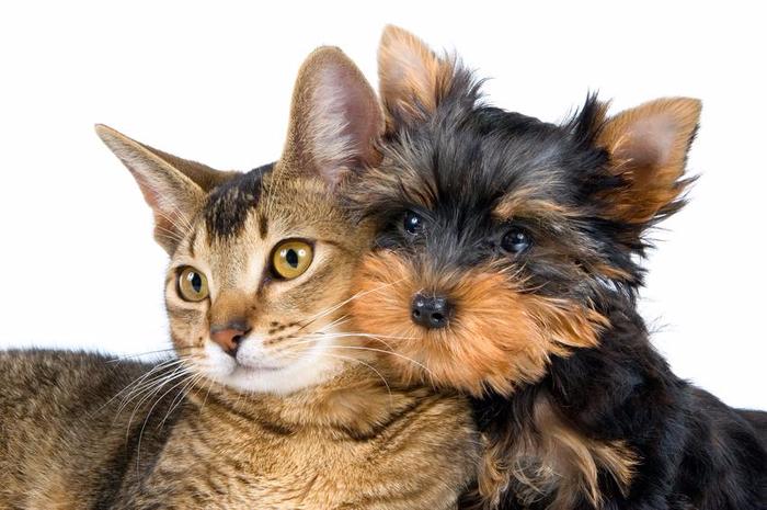 кошка и собака фото (700x465, 279Kb)