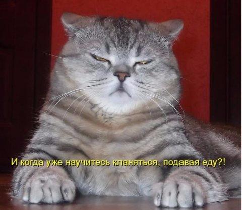 1350717786_sotnya_uboynih_kotomatric_629-5 (480x418, 138Kb)