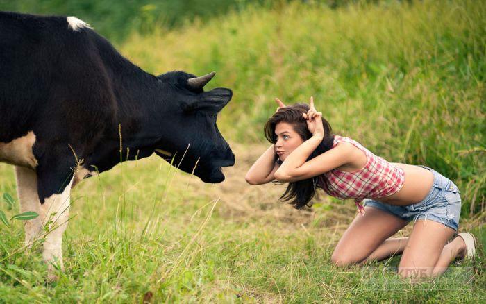 красивые коровы1а (700x438, 290Kb)