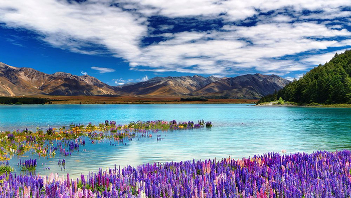 Lake-Tekapo-Amazing (700x394, 420Kb)