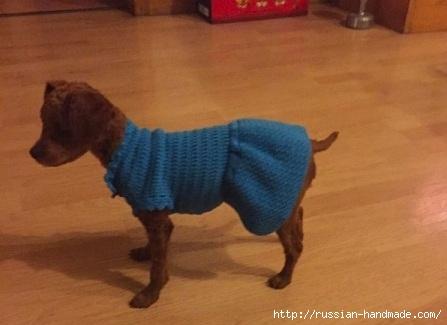 Вяжем крючком одежку для собачки (5) (447x325, 73Kb)