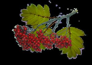 0_de649_4773015b_XL (100x73, 73Kb)