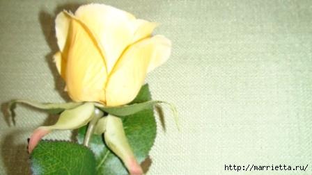 Денежные розы (4) (448x252, 70Kb)