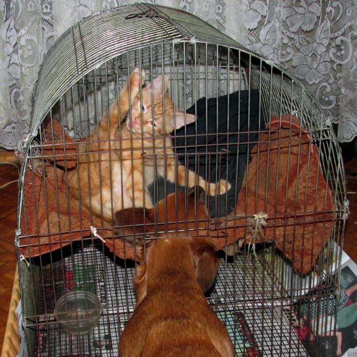 спрятаться от собаки/683232_ya_v_domike (700x700, 558Kb)