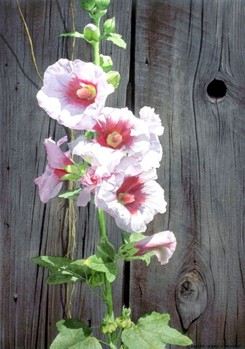 6Hollyhocks and Barnwood (492x700, 68Kb)
