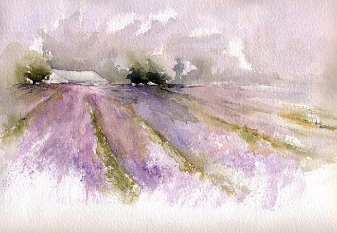 Lavender Fields (655x454, 364Kb)