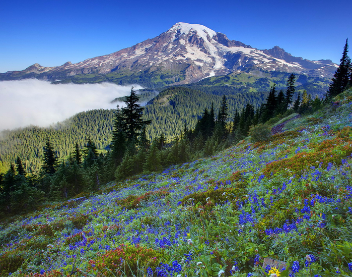 Mount_Rainier_National_Park_03 (700x549, 650Kb)