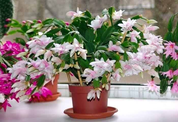 Смотреть комнатных цветущих цветов 23