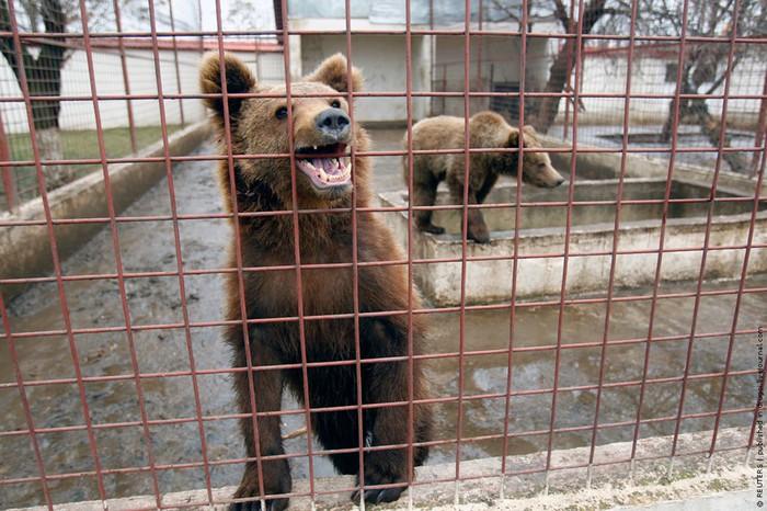 Криминальный «зоопарк» в Бухаресте