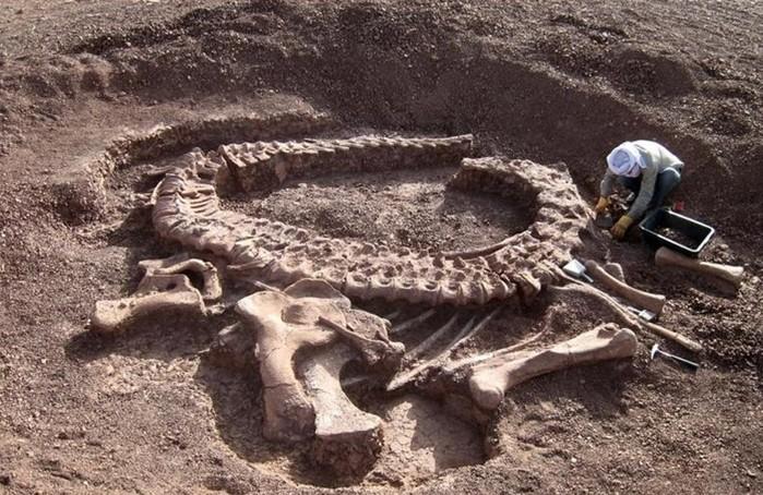 Знакомьтесь   динозавры: основные факты о звероящерах