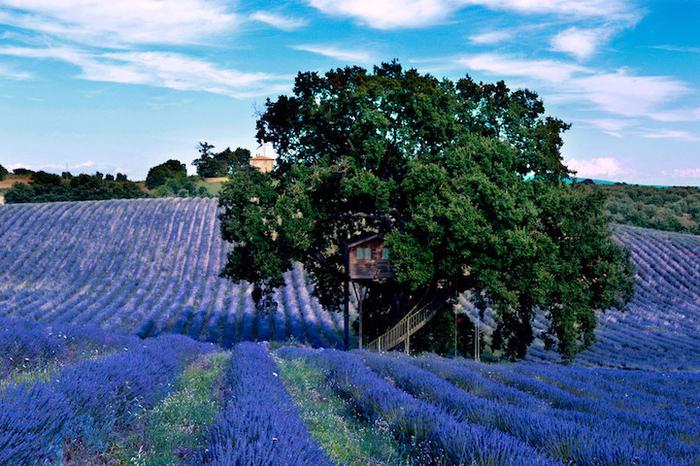 Уютный и комфортабельный дом на поле, где растет лаванда