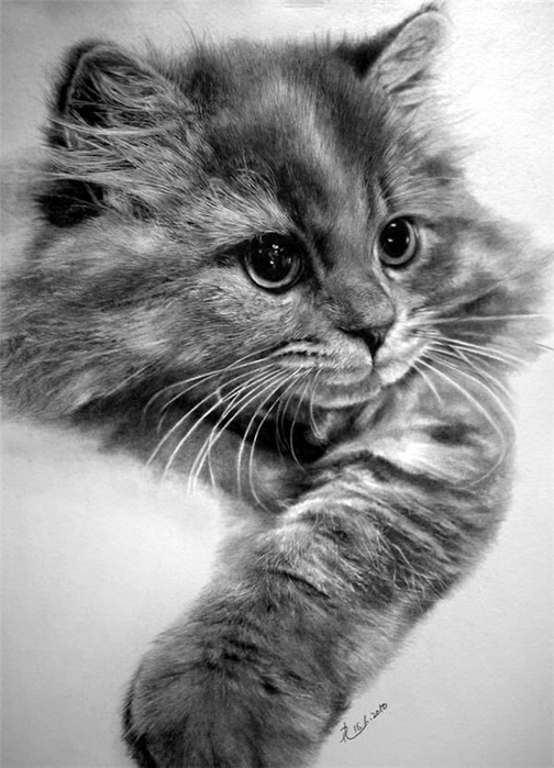 Realistic-Animal-Pencil-Drawings-1 (504x700, 209Kb)
