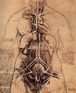 Периодичность ОБНОВЛЕНИЯ организма человека (245x300, 21Kb)