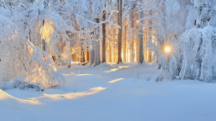 зимний лес 20 (700x393, 319Kb)