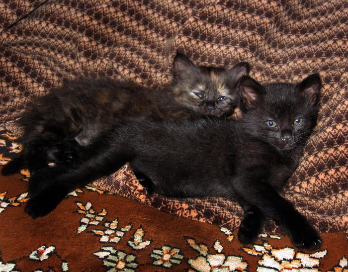 чёрный котёнок/683232_begemot_11_2005 (700x547, 454Kb)