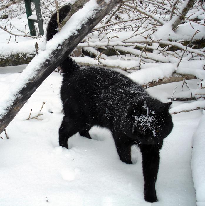 Чёрный кот Бегемот/683232_begemot27_12_2014 (698x700, 306Kb)
